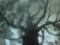 Hedgehog-in-the-Fog-Tree